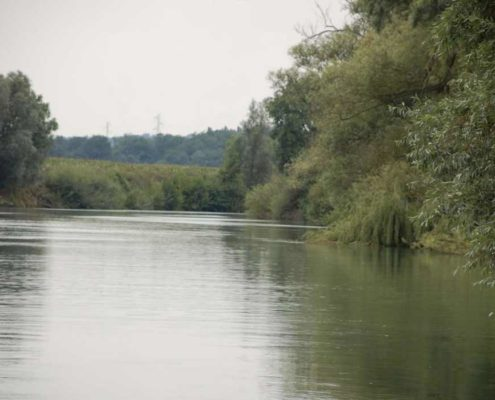 A rich and diverse nature can be discovered on the Marne river banks from silent electric boats electric licence-free boat