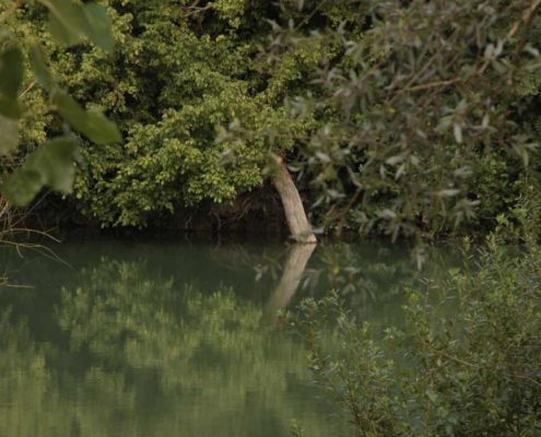 Discover the fauna and flora of the Marne with Marin d'Eau Douce