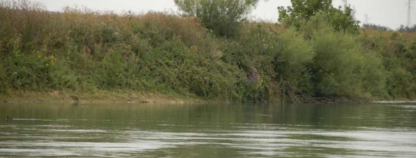 Discover the wild river banks of the Marne with an electric, licence-free boat