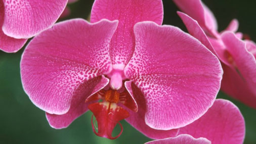 Admire the Orchids