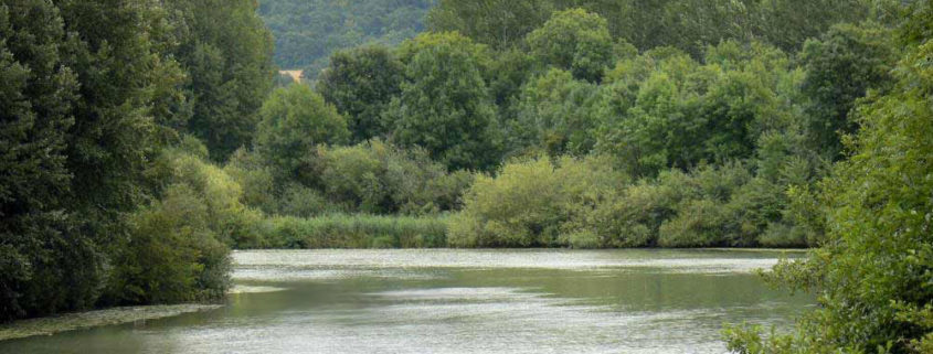 Rich and diverse landscapes on the Marne