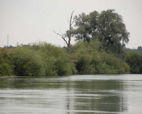 Sailing on the Marne with our licence-free boats