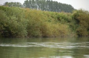 The Marne River, wild and natural near Meaux