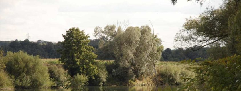 The Marne seen from the river banks